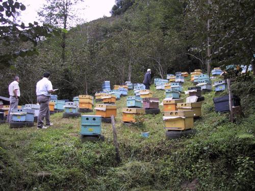 Arı ve Bal Sevkinde Kayıt Dönemi