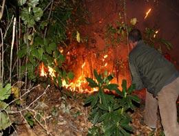 Tirebolu''da orman yangını