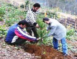 Ormanlar iyileştiriliyor