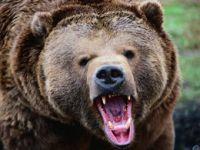 Giresun'da Yürüyüş sırasında ayı saldırdı